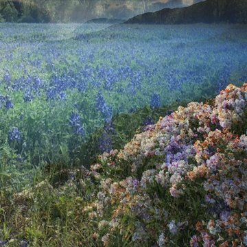 night flowers mixed with texas wildflowers square