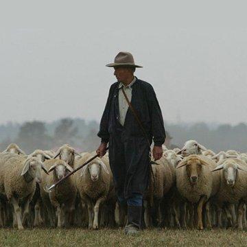 appended square size bg shepherd 11